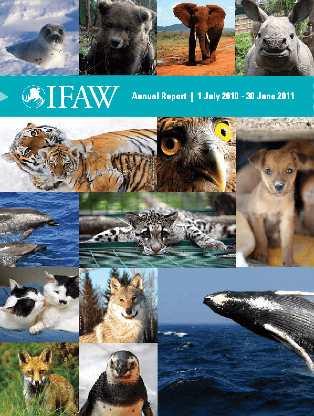 The International Fund for Animal Welfare Annual Report 2011